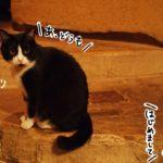 150年前の蔵はアートスペースに。看板猫のいる浅草のカフェバー「ギャラリー・エフ」
